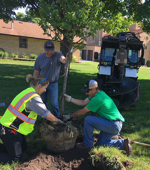 tree being planted at the Lakeville Area Arts Center